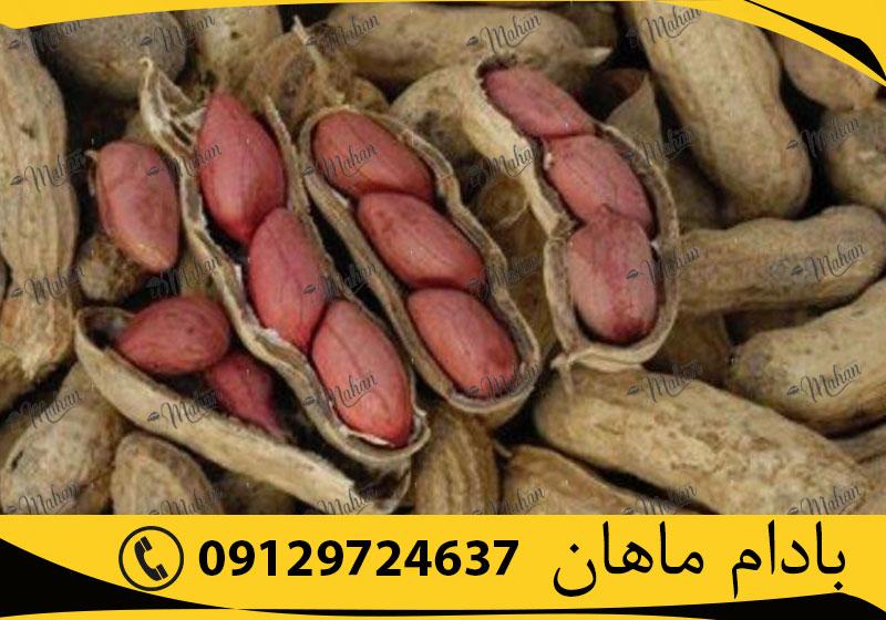 فروش عمده بادام زمینی آستانه اشرفیه