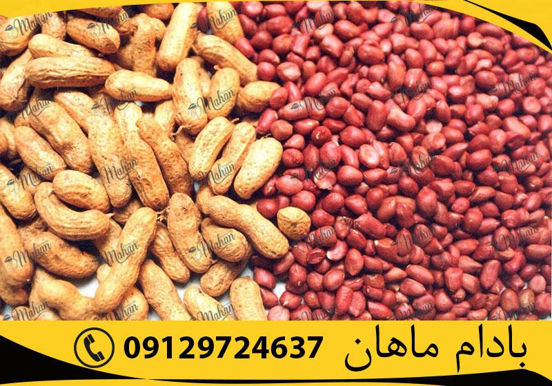قیمت بادام زمینی با پوست